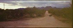 Ultronic Panoramic / Fuji 200 (K e v i n) Tags: ultronicpanoramic fuji200 35mm film marana arizona az sonorandesert desert outside dogs xavi lucy dirtroad tortolitamountains tortolitas molly firstroll