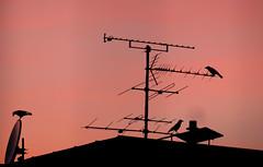 meeting (augenster*chen) Tags: abendlicht vögel abendrot sonnenuntergang