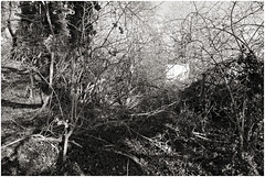 im korkus 287 (beauty of all things) Tags: eschweiler imkorkus wald forest dschungel jungle gestrypp gestrüpp scrub