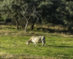 Verdes praderas (pedroramfra91) Tags: naturaleza nature animales animals exteriores outdoors verde green invierno winter arboles trees