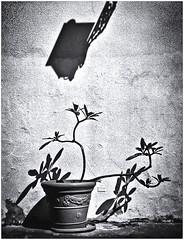 Lomography (Black and White Fine Art) Tags: lomography lomografia lomo holga holga120n kodak bw400cn filmexpiredin2007 sanjuan oldsanjuan viejosanjuan puertorico bn bw niksilverefexpro2 lightroom3 sombras shadows