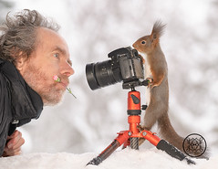 Red squirrel standing behind a camera and a person with a flower (Geert Weggen) Tags: squirrel camera red animal backgrounds bright cheerful close color concepts conservation culinary cute damage day earth environment environmental equipment love valentine flower winter snow photo bouquet model person human man dianthus bispgården jämtland sweden geert weggen hardeko ragunda