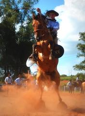 Hartwig e Federal da Minuano (Eduardo Amorim) Tags: gaúcho gaúchos gaucho gauchos cavalos caballos horses chevaux cavalli pferde caballo horse cheval cavallo pferd pampa campanha fronteira quaraí riograndedosul brésil brasil sudamérica südamerika suramérica américadosul southamerica amériquedusud americameridionale américadelsur americadelsud cavalo 馬 حصان 马 лошадь ঘোড়া 말 סוס ม้า häst hest hevonen άλογο brazil eduardoamorim gineteada jineteada