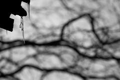 (Mikko Luntiala) Tags: 2018 bw blackandwhite bokeh branches cold d600 dark december finland gray grey harmaa icicles joulukuu jääpuikot kylmä mikkoluntiala mustavalkoinen nikond600 oksat puunoksat silhouette siluetti synkkä talvi tamronsp70200mmf28divcusdg2 treebranches winter