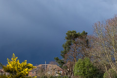 Storm clouds (20190317) (Graham Dash) Tags: addlestone mimosa clouds rainclouds shrubs yellow