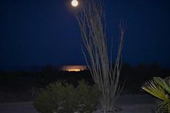 Moon rising tonight (thomasgorman1) Tags: moon night dark flash desert sea cortez nikon scenic moonrise fullmoon ocotillo palmtree