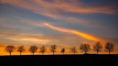 trees_in_a_row (Joerg Esper) Tags: baum bäume tree trees natur nature landscape landschaft dusk dämmerung sonnenuntergang sunset clouds cloud moody sky himmel wolken wolke olympus olympusomdem1 olympus124028 olympusmzuikodigitaled12‑40mm128pro