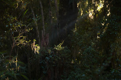 @ the forest 4 (dirojas) Tags: leica m240 90mm summicron huilohuilo chile forest panorama