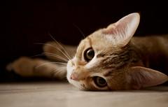 (An Arzhig) Tags: chat chaton animal cat kitty pet panasonic lumix gx800 50mm 17 aperture micro 43
