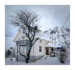 Home and Tree (W.Utsch) Tags: home tree landscape lofoten norway sony tse canon shift winter snow house