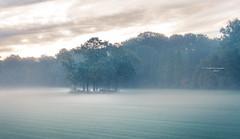 Mirage (Ingeborg Ruyken) Tags: 2018 autumn october woods berlicum fall flickr herfst ochtend morning wamberg forest oktober natuurfotografie instagram 500pxs shertogenbosch bos