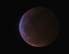 "Luna Eclipse ""Super Blood Wolf Moon"" (FotoGrazio) Tags: redmoon waynesgrazio nature fotograzio moon orb round photoeffect eclipse celestrialobject mothernature waynestevengrazio beautiful waynegrazio fullmoon lunaeclipsejanuary20 bloodmoon january202019 closeup satellite luna sacred lunaeclipse"