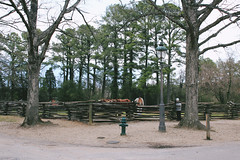Nicholson and Botetourt (danicalees) Tags: williamsburg virginia colonial march 2013 overcast cloudy trees winter horses horse fence animal animals nature
