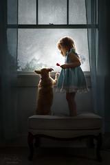 View From Above ({jessica drossin}) Tags: jessicadrossin portrait pet dog pup puppy friends animal child girl toddler dress blue window rain rainy drops weather storm lollipop heart wwwjessicadrossincom