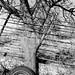 Tree and chute