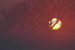 Sunset (Lepphotos) Tags: nebraska na8257a explore