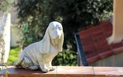 Le Chien Sur le Rebord du Muret (Bernard C **) Tags: canon france provence paca provencealpescôted'azur bouchesdurhône lerove statue chien dog