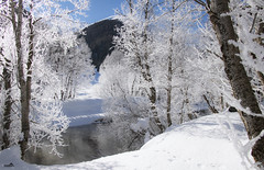 Winter fairytale in the Goms (The Rhône river) (VandenBerge Photography) Tags: switzerland winter winterscape goms geschinen uppervalais canon europe season travel trees nature snow winterfrost river therhoneriver eos80d