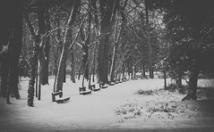 Mysterious forest (max tuguese) Tags: black white bw blackwhite bianco nero blanc noir noiretblanc blanco negro blancoynegro schwarz weis monochrome photographer outdoor outside dark forest maxtuguese nikon d3400 35mm nature landscape snow snowy cold winter naturephotography explore