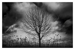 Hitch·cock·i·an (VanveenJF) Tags: ontario artsy hitchcock sony a7ll dark bw clouds cloudy moody mood weeds grass nature landscape hamilton canada