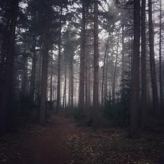 dark forest (Jos Mecklenfeld) Tags: netherlands groningen westerwolde terapel nulbos appleiphone5s outdoor hiking fog mist natuur nature bos forest