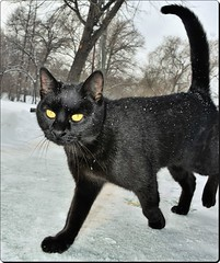 Cat in winter (Ioan BACIVAROV Photography) Tags: cat chat pisica animal