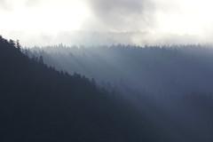 Wood shadows (Andrea Lugli) Tags: alpes dolomites mountain canon eos 60d italy trentino molveno
