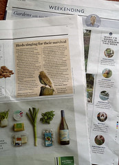 "Challenge Friday 2019, week 11, theme beak (1) - Waitrose Weekend article""Birds singing for their survival"" (karenblakeman) Tags: challengefriday cf19 beak birds waitrose newspaper text march 2019 uk"