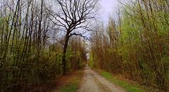 Un peu en retard ! A little late! (Evim@ge) Tags: elements arbre tree sentier track printemps spring vert green lane chemin promenade walk outside extérieur grésivaudan