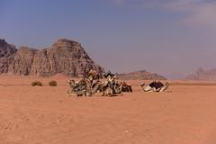 Wadi Rum Desert, Jordan, January 2018  842 (tango-) Tags: giordania jordan middleeast mediooriente الأردن jordanien 約旦 ヨルダン wadirum desert