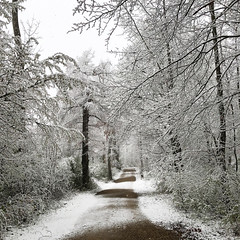 Winter again (Rosmarie Voegtli) Tags: path winter trees dornach morningwalk snow