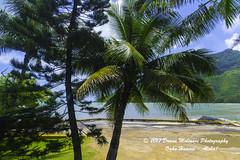 OAHU-HAWAII_1D50918-01 (Donna Molinari Photography) Tags: sanjose ca usa