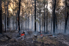 nowa-nowa-3600-ps-w (pw-pix) Tags: fire bushfire burning flames embers trees logs ash sticks dirt black grey orange yellow green controlledburn fuelreductionburn turnedintoabushfire smoke smokey haze hazy afternoon lateafternoon nearbruthennowanowaroad nearbruthenbuchanroad kennyroad prettysally nowanowa eastgippsland gippsland easternvictoria victoria australia peterwilliams pwpix wwwpwpixstudio pwpixstudio