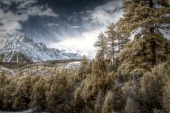 San Juan Mountains, Colorado (Thru_ajs_eyes) Tags: mountains infrared pineforest snowcaps