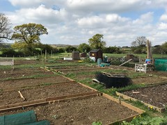 Photo of Haynes allotments