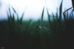 (suzcphotography) Tags: water drop dew macro nature canon 5dmarkii 50mm