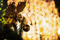 Flowing Lights at Silent Night (moaan) Tags: kobe hyogo japan jp ornament christmasornament christmastree illuminations illuminatedbylights night lights nightlights nightshot nightphotography bokeh dof bokehphotography canon canonphotography canoneos5dmarkiii ef35mmf14lusm utata 2018