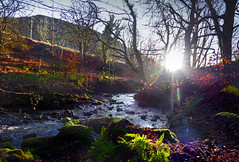 The Glen on Thursday (6) (g crawford) Tags: westkilbride glen kirktonhallglen kirktonhall ayrshire northayrshire crawford water sun sunbirst glenbryde burn river stream brook fern bracken panorama