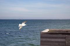Target Engaged! (Eisbär auf Taiwan) Tags: deutschland baltic beach sea schleswigholstein ostsee heiligenhafen