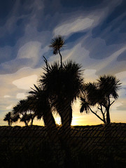 The Rising Sun (Steve Taylor (Photography)) Tags: black blue yellow contrast newzealand nz southisland canterbury christchurch tree trunk silhouette texture autumn cloud sky southnewbrighton dawn sunrise