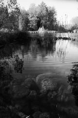 The first days of autumn (Eklandet) Tags: monochrome monochromephotography bw svartvitt black white blackandwhite blackandwhitephotography blackandwhitephoto blackandwhitephotonatur fineartphotography lake dalaälven river riverscene riverscape sweden swedenfoto