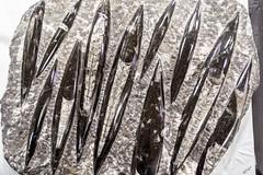 Gem and Mineral Show Fossil (WayNet.org) Tags: fossil wayne county photo by jane holman indiana rock kuhlman show richmond gem mineral holmanphotoscom center fairgrounds kuhlmancenter photobyjaneholman photobyjane waynecounty