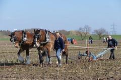 Ploughing (Katie~B) Tags: ploughing farming farm spring plough furrow soil earth horses tractor farmer