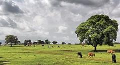 IMG_4097_qhdr (XimoPons : vistas 5.000.000 views) Tags: ximopons etiopia ethiopa paisajes landscape