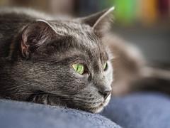 My tiny kitty, Eva (Adi Arba) Tags: cat kitty relaxing mood rainy greeneyes