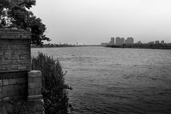 Cairo, Egypt (pas le matin) Tags: tree arbre water river nile nileriver nil sky ciel city cityscape ville cairo lecaire egypt égypte travel voyage world buildings architecture canon 7d canon7d canoneos7d eos7d nb bw noiretblanc blackwhanwhite monochrome