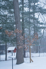 2019 Snow Trees-39 (Michael L Coyer) Tags: snow snowstorm forest woods tree haze winter bird birdhouse