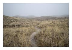 Husby Klit, Denmark, 2019 (csinnbeck) Tags: eosm10 22mm 35mm canon denmark fog mist foggy fields roads road winter february north sea digital landscape jutland westcoast west eosm grass sand field sky m10 eos dune dunes
