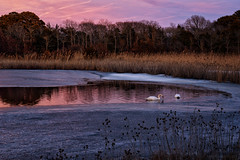 fire and ice (tom bourdot) Tags: bluehour capemaypoint clouds colorful dimming dreamlike dusk evening floating ice january lake landscape lastlight mirror muteswan newjersey nikond3300 outdoor pond pretty reflection seasons serene sky sunset surface swans thawingout tidalmarsh tombourdot twilight water wetlands winter fireandice