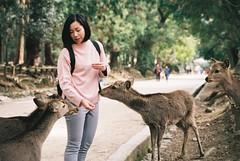Please Share (GingerKimchi) Tags: nara osaka japan travel nature asia film 35mm fujifilm canon deer canona1 2019 spring february march